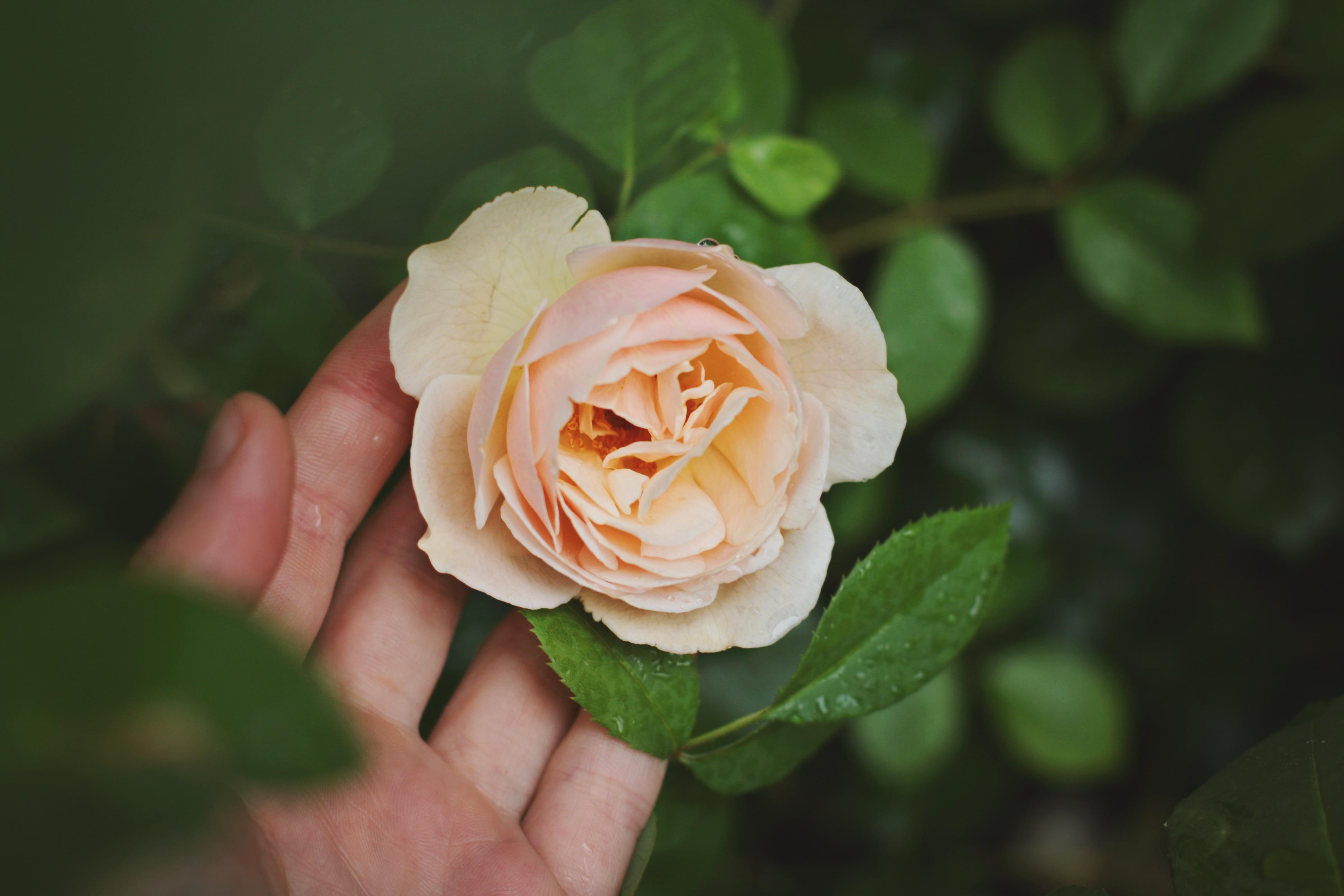 Blumen sorgen für mehr Lebenszufriedenheit